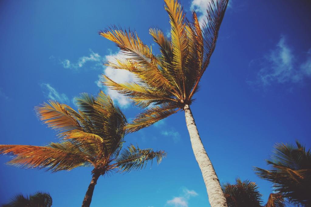 palmtrees1