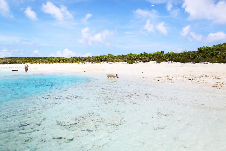 bahama67