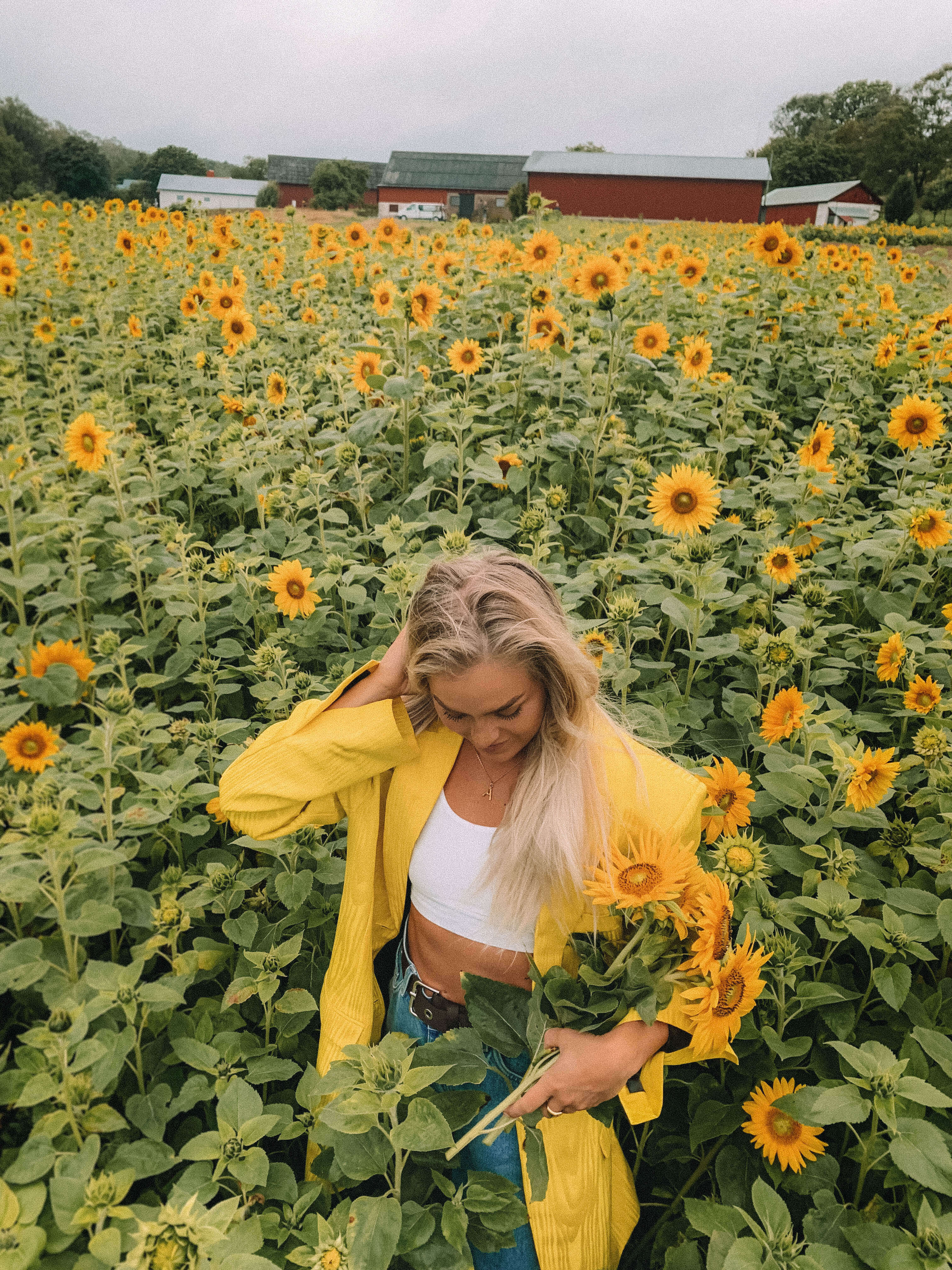 solrosfält i Sverige